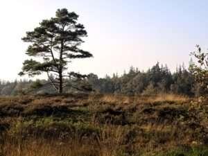 Langenhorner Heide